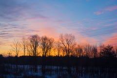 Bäume silhouettiert gegen einen goldenen und purpurroten Sonnenaufgang Stockfoto