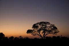 Bäume silhouettiert am Sonnenaufgang Lizenzfreie Stockfotos