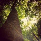 Bäume sind Geschöpfe auch Lizenzfreie Stockfotografie