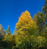Bäume in Sofiyivka-Park in Uman, Ukraine stockfotografie