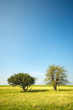 Bäume am Sommer Lizenzfreie Stockfotos