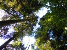 Bäume am Sommertag stockbild