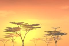 Bäume am Sonnenuntergang Stockfoto