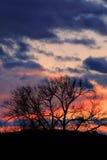 Bäume am Sonnenuntergang Stockbilder