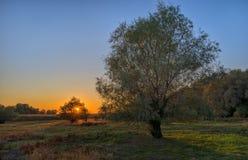 Bäume am Sonnenuntergang und am schönen Himmel Stockbild