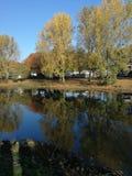 Bäume spiegeln in einem See wider lizenzfreie stockfotos