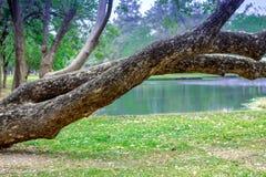 Bäume stellen öffentlich für sich entspannen gleich stockfoto