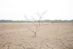 Bäume trocknen von der Dürre Lizenzfreie Stockfotos