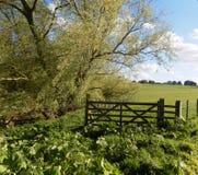Bäume u. Feld-Tor-Ansicht Nr Crookham, Nord-Northumberland, England Stockbilder