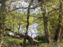 Bäume u. Fluss-Ansicht Nr Crookham, Nord-Northumberland, England Stockbild