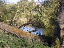 Bäume u. Fluss-Weg Nr Crookham, Nord-Northumberland, England Lizenzfreie Stockfotos