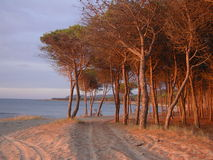 Bäume u. Meer lizenzfreie stockfotografie
