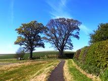 Bäume u. Weg Nr Crookham, Nord-Northumberland, England Stockfotos