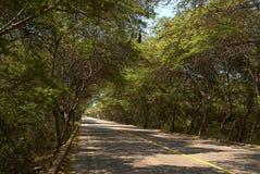 Bäume um die Weise mögen einen Tunnel Stockfotografie