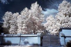 Bäume und altes Tor Stockbilder