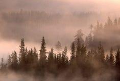 Bäume und anhebender Nebel Stockfotografie