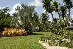 Bäume und Anlagen in einem Garten Stockfotografie