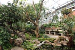 Bäume und Anlagen innerhalb eines Gewächshauses im botanischen Garten Gothenburgs, Schweden Lizenzfreies Stockfoto