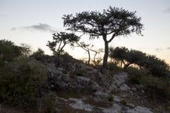 Bäume und Anlagen in Magagascar Stockbild