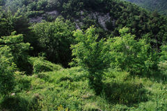 Bäume und Büsche in den Bergen Lizenzfreie Stockfotos