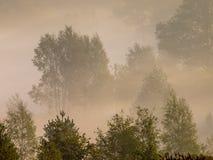 Bäume und Büsche im Nebel Stockbilder