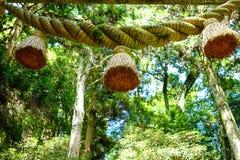 Bäume und Berg Lizenzfreies Stockfoto