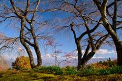 Bäume und Berge. Lizenzfreie Stockfotos