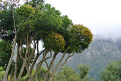 Bäume und Berge stockfotos