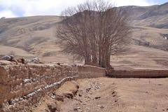 Bäume und Berge lizenzfreies stockfoto