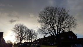 Bäume und bewölkter Himmel Lizenzfreies Stockfoto