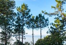 Bäume und bewölktes Stockfoto