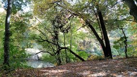 Bäume und Blätter Stockfotografie