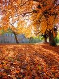 Bäume und Blätter in den Herbstfarben Stockfotografie