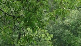 Bäume und Blätter gegen den blauen Himmel Natur fängt an zu blühen Frühling stock footage