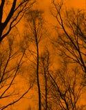 Bäume und bloße Zweige Lizenzfreies Stockbild