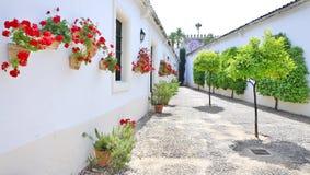 Bäume und Blumen auf den weißen Straßen Stockbild