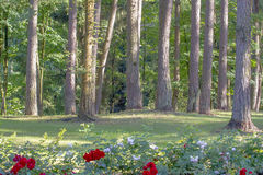 Bäume und Blumen in der grünen sonnigen Stadt parken Lizenzfreies Stockfoto
