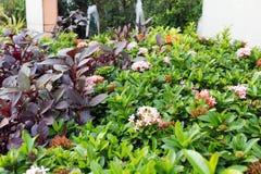 Bäume und Blumen in einem schönen Garten lizenzfreies stockfoto