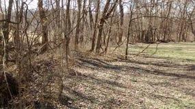 Bäume und Boden im Fall Stockfotografie