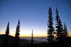 Bäume und Dämmerung lizenzfreies stockfoto