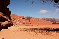 Bäume und die Schatten der theirs in der Wüste Wadi Rum lizenzfreie stockbilder