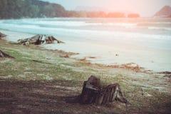 Bäume und ein enormer toter Baumstumpf verließen auf dem Strand Blätter im Th lizenzfreies stockfoto