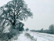 Bäume und ein Schnee bedeckten Strom Stockfotos