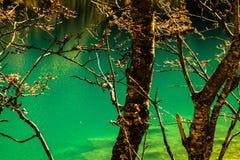 Bäume und ein See Lizenzfreie Stockfotografie