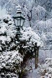 Bäume und eine Leuchte im ths Schnee Stockfotografie