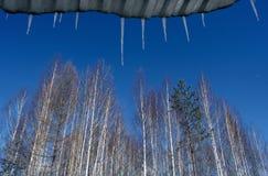 Bäume und Eiszapfen auf Hintergrund des blauen Himmels stockbilder
