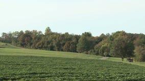 Bäume und Ernten auf einem Bauernhof stock video