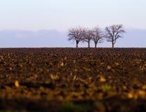 Bäume und Feld Lizenzfreie Stockfotografie