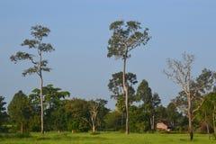 Bäume und Felder lizenzfreie stockbilder