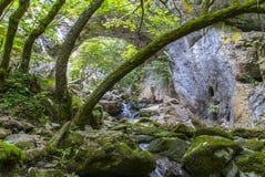 Bäume und Felsen Stockbild